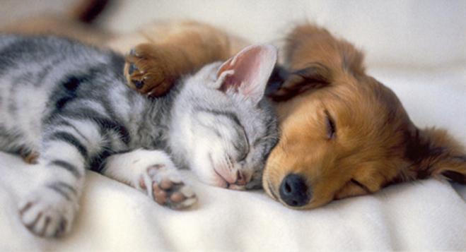 puppykitten cute pic