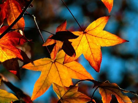 Fall-Leaves-beautiful-Autumn