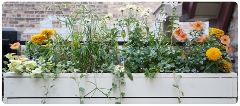 planter_feature
