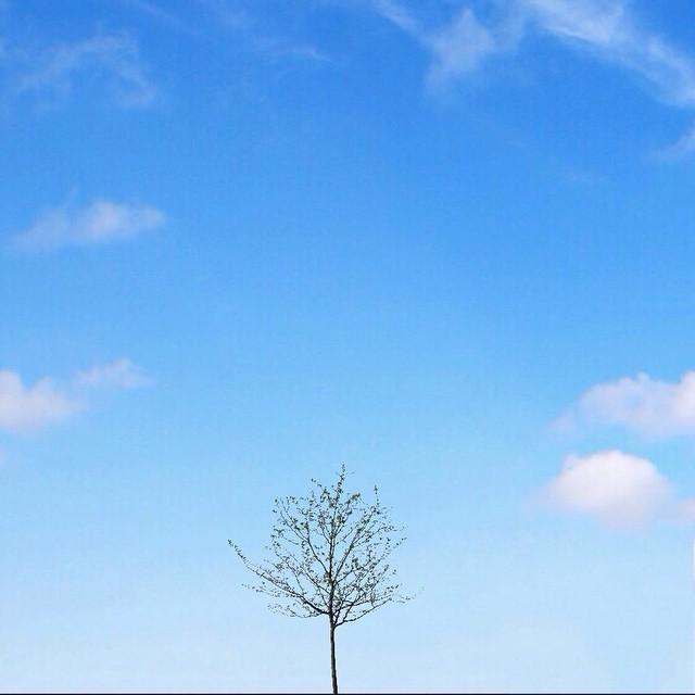 baby tree_peterchanur_instagram