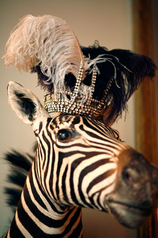 zebra wearing a crown