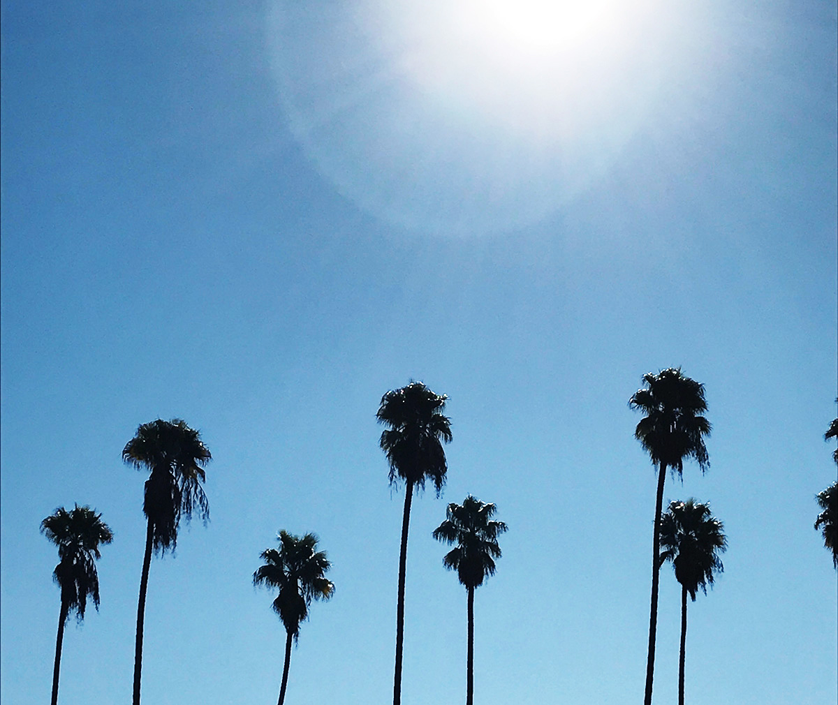 palm-trees_la