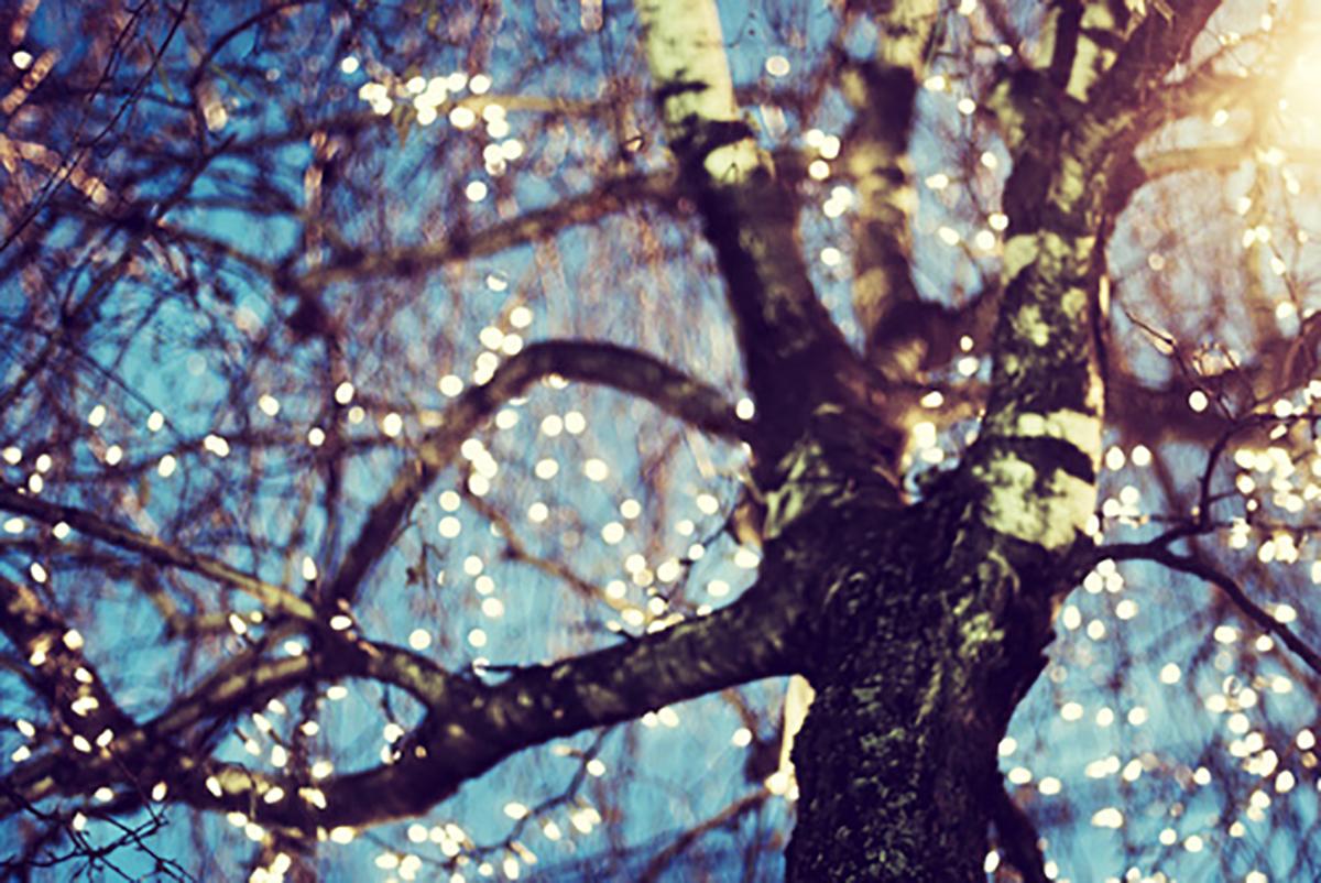 sparkly-limbs