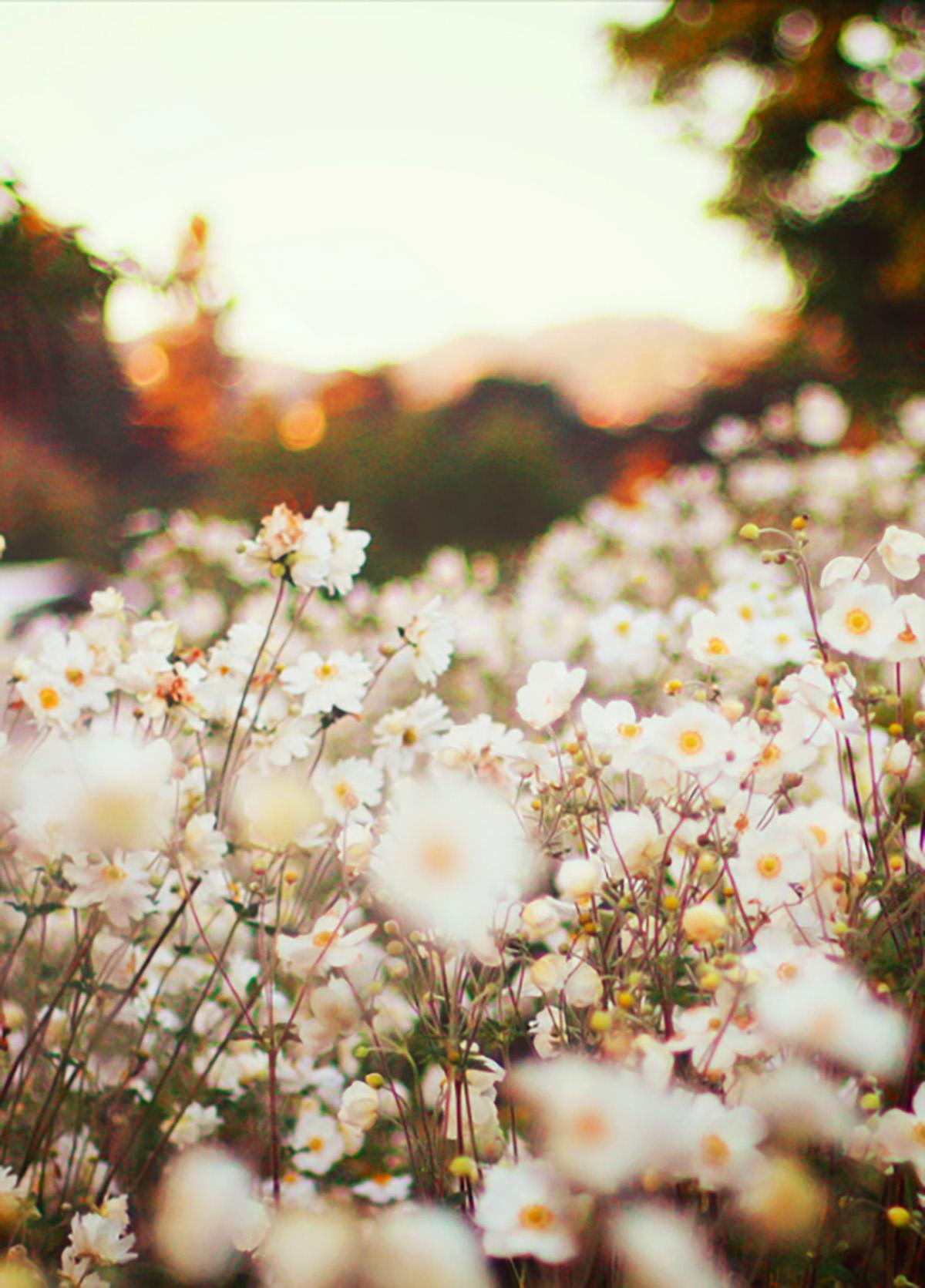 flowers_field